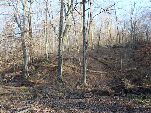 Tr 143 - 47 Acres : Junction City : Perry County : Ohio