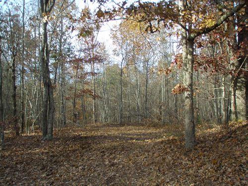 Woodlands Full Of Wildlife : Howardsville : Buckingham County : Virginia