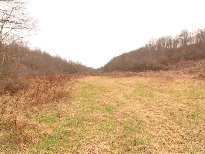 Toker Rd, 63 Acres : Hopedale : Harrison County : Ohio