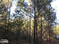 Cowpens Creek Forest Homesite : Wagarville : Washington County : Alabama