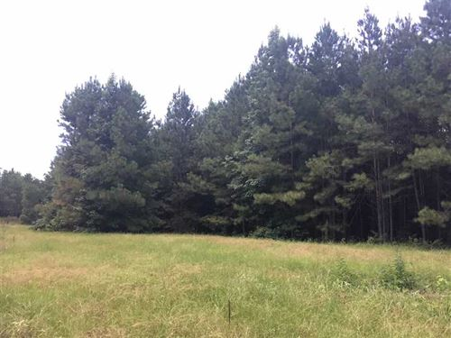 15 Acres of Timberland W/Beaut : Chunky : Newton County : Mississippi