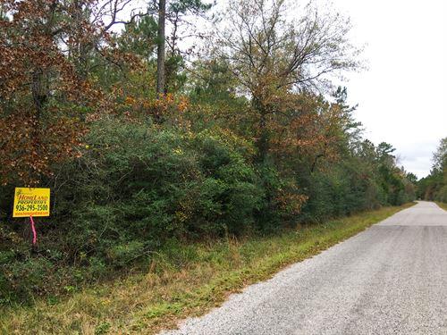 30.7 Acres Trinity Weldon Road : Trinity : Walker County : Texas