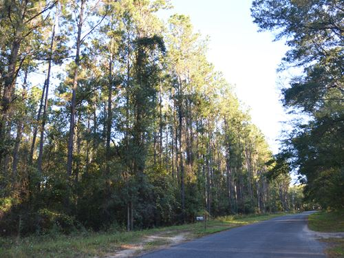 Great Hunting Close To Tallahassee : Lloyd : Jefferson County : Florida