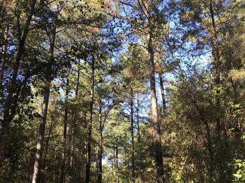 Caison Tract : Bowman : Orangeburg County : South Carolina