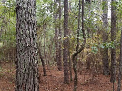 Plant Road Tract : Childersburg : Talladega County : Alabama