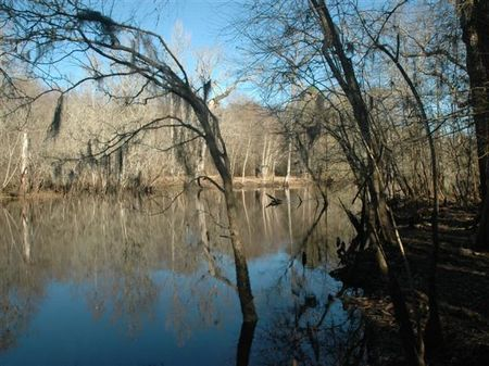 Reduced 466 Ac W/ River Frontage : Andrews : Williamsburg County : South Carolina