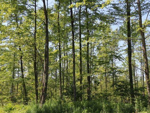 Miscauno Island Lane : Daggett : Menominee County : Michigan