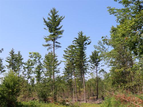State W2 Rd, Chalk Hills : Daggett : Menominee County : Michigan