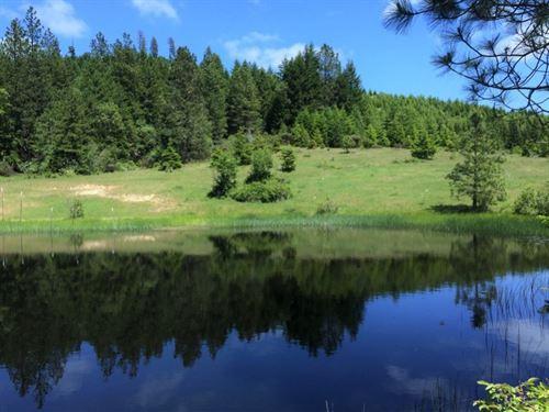 Cow Creek : Azalea : Douglas County : Oregon