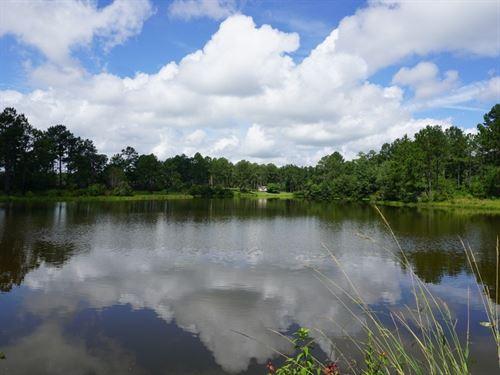 Willingham Farms : Rochelle : Wilcox County : Georgia