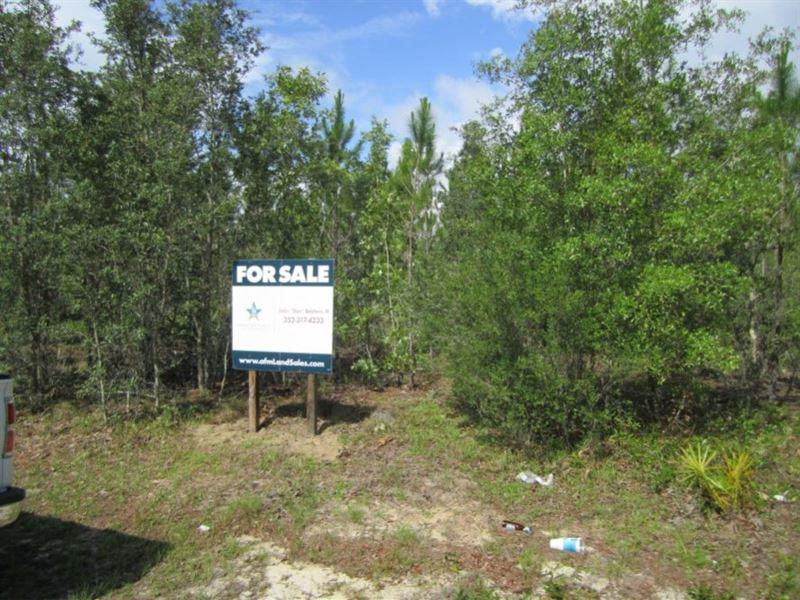 Fox Pen West 429 Acres : Hawthorne : Alachua County : Florida