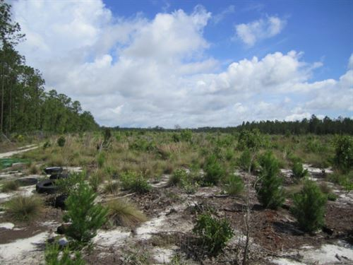 Fox Pen East 168 Acres : Hawthorne : Alachua County : Florida
