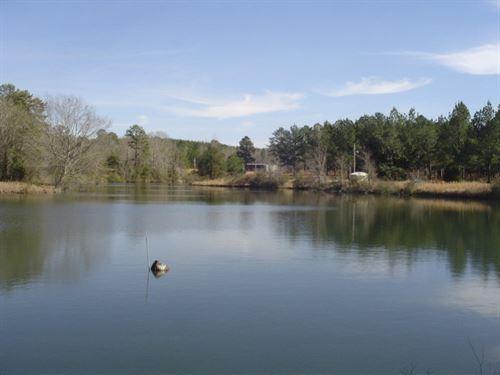 Seed Orchard : Pennington : Choctaw County : Alabama