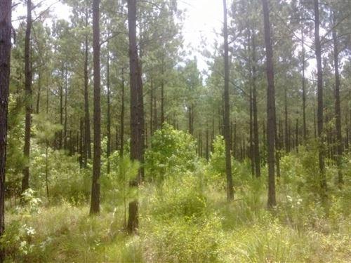 Phelps Creek East : Opelika : Lee County : Alabama