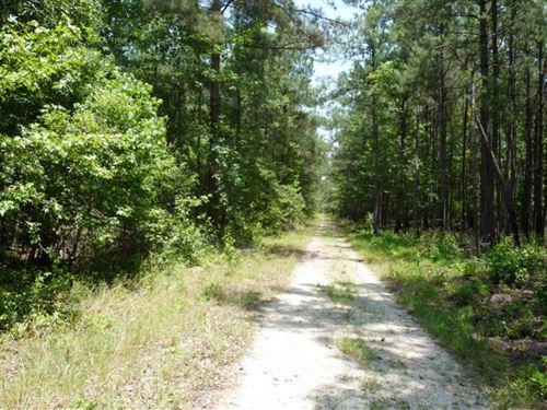 Shodon Tract : Turbeville : Clarendon County : South Carolina