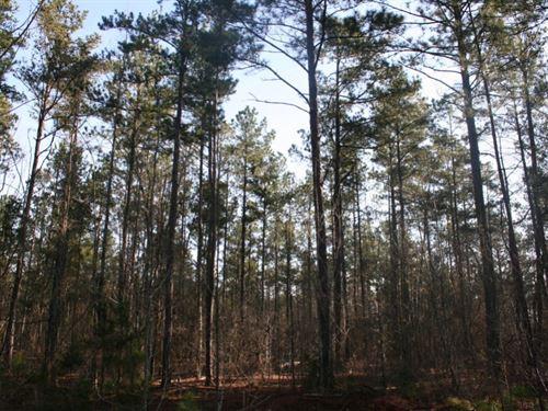 Potato Creek Timberlands : Thomaston : Upson County : Georgia
