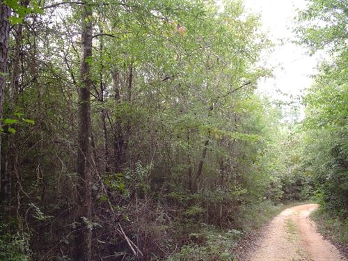 37 Acres in Jackson, AL : Jackson : Clarke County : Alabama
