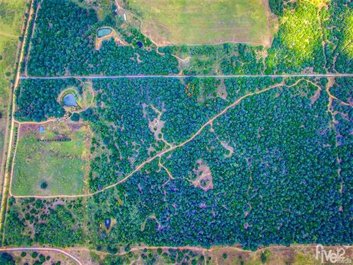 More Than 106 Acres of Prime Hunti : Mingus : Erath County : Texas