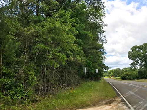 Woodville 48 Acres : Woodville : Tyler County : Texas