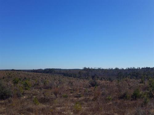 Pittman Hill Road : Marianna : Jackson County : Florida