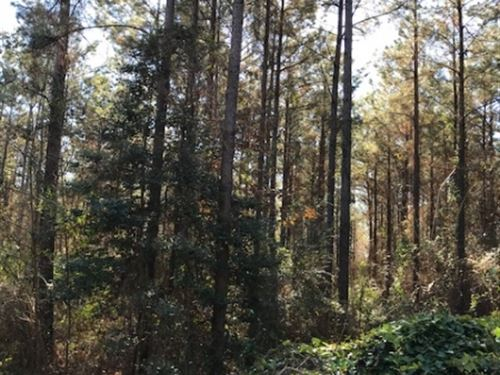 40 Acres Jefferson Davis County, Ms : Prentiss : Jefferson Davis County : Mississippi
