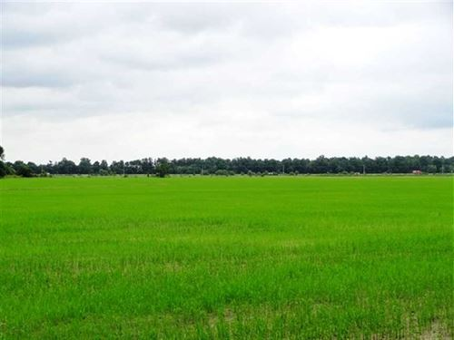 181 Irrigated Rice Farm Near : Sedgwick : Craighead County : Arkansas
