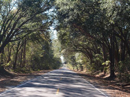 Slipaway Plantation : Blitchton : Bryan County : Georgia