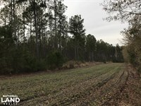 Moselle Recreational & Timber Inves : Islandton : Colleton County : South Carolina
