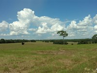 104 Acres Of Gorgeous Pasture : Dunnellon : Citrus County : Florida