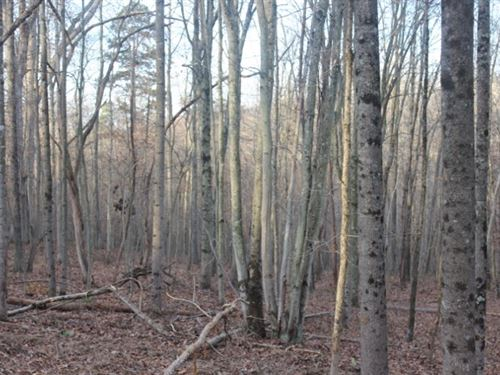 Mount Carmel Rd Tract 4 - 10 Acres : Thurman : Gallia County : Ohio
