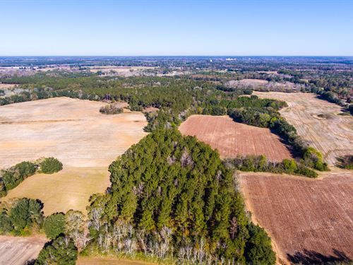 Income Producing Farm And Timber : Blakely : Early County : Georgia