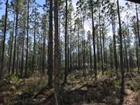 Blue Creek-A : Hosford : Liberty County : Florida