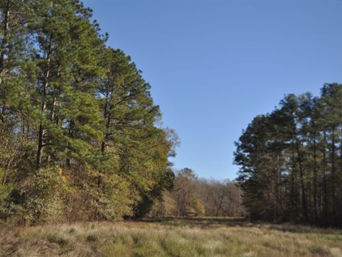1,710 Acres Ten Mile Creek : Pine Forest : Orange County : Texas