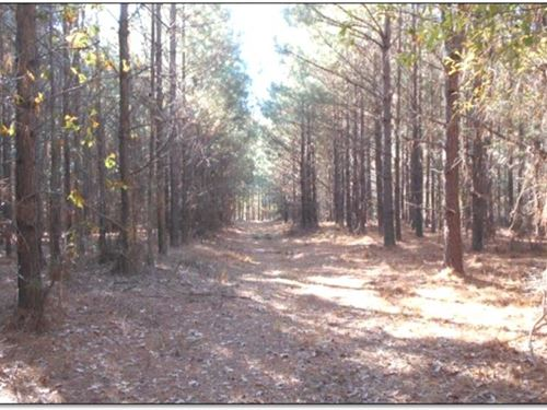 147.183 Acres In Hinds County : Raymond : Hinds County : Mississippi