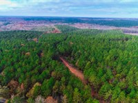 Great Timber Near Lake Succession : Loundesville : Abbeville County : South Carolina