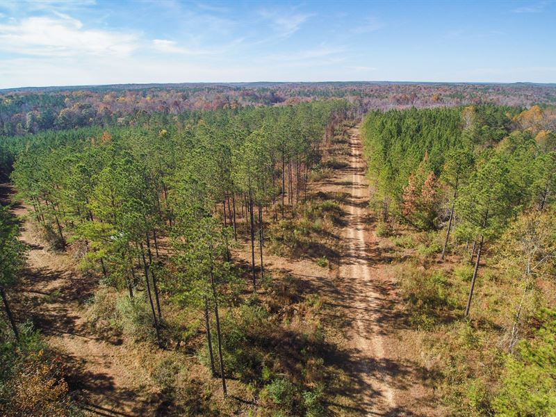 Timber Tract / Lake Martin : Reeltown : Tallapoosa County : Alabama