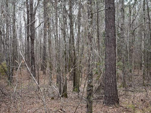 66-082S Buckhorn Creek South Tract : Coy : Wilcox County : Alabama