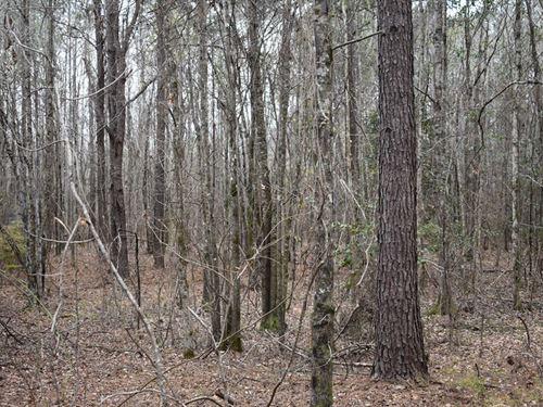 66-082S Buckhorn Creek South Tract : Annemanie : Wilcox County : Alabama