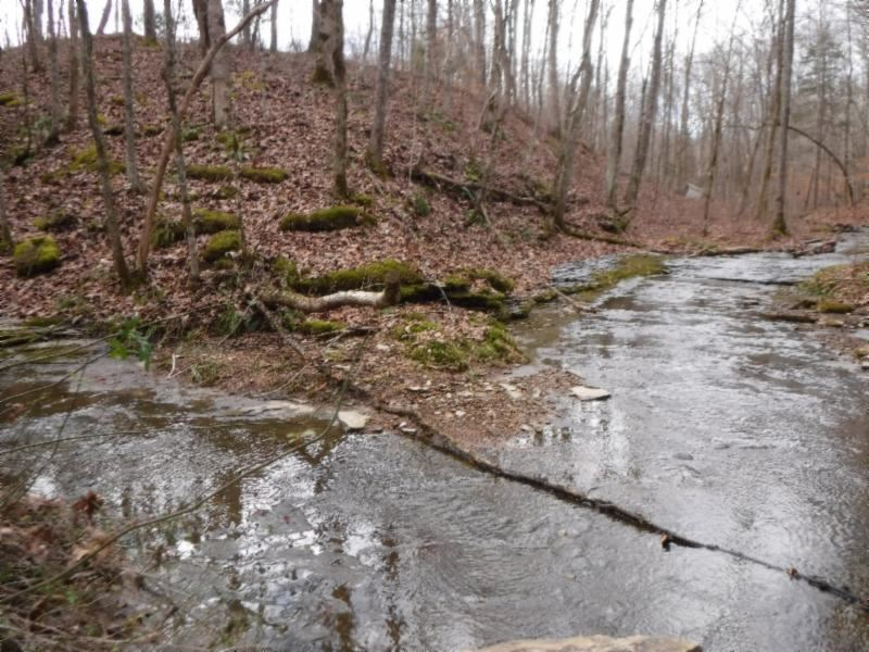 85.99Ac W/Creeks, Stocked Pond : Lafayette : Macon County : Tennessee