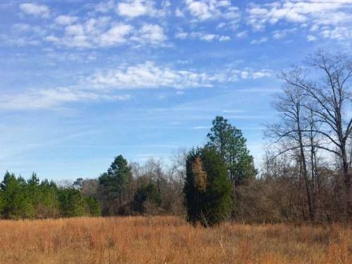 Excellent Wooded Hunting Tract in : Mauk : Taylor County : Georgia