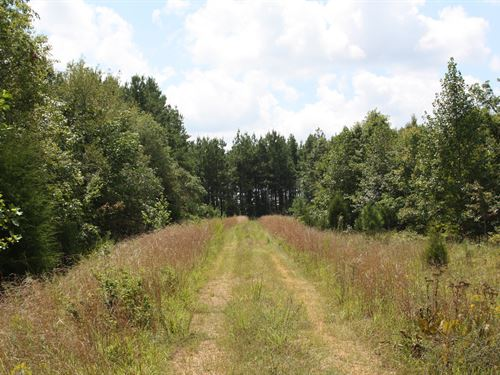 Pafford Tree Farm : Erin : Houston County : Tennessee