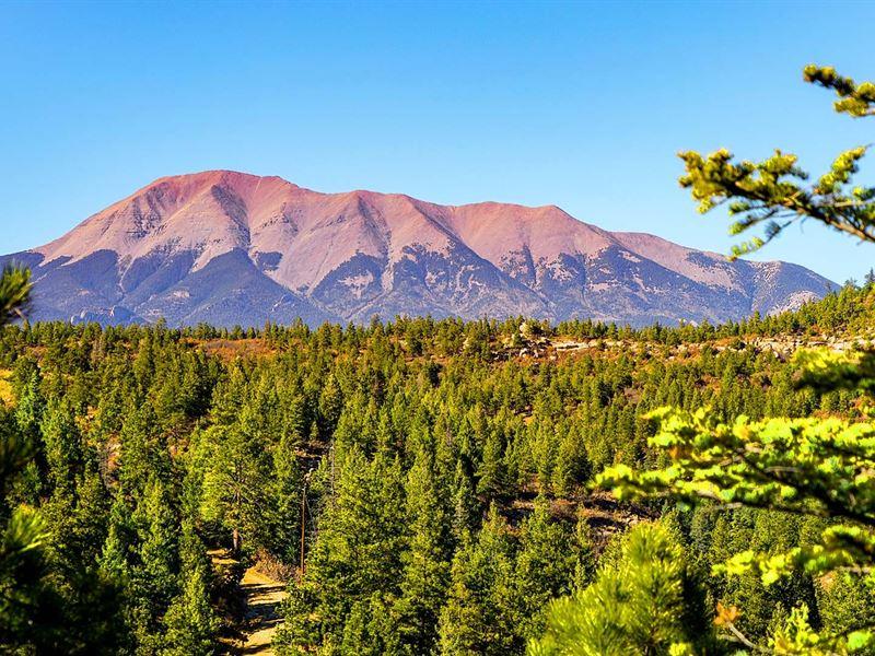 Wooded Mountain Homesite With Power : Weston : Las Animas County : Colorado