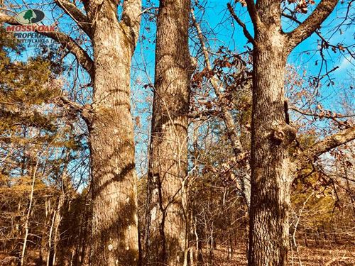 Price Drop, Wooded 10 Acres With : Ash Flat : Sharp County : Arkansas