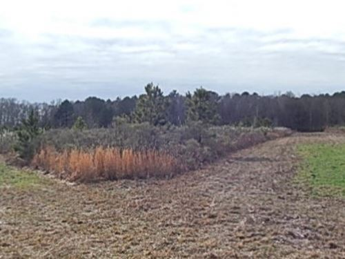481 Acres In Holmes County In West : West : Holmes County : Mississippi