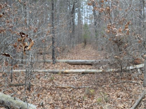 150 Acres - No Bank Needed : Salem : Dent County : Missouri