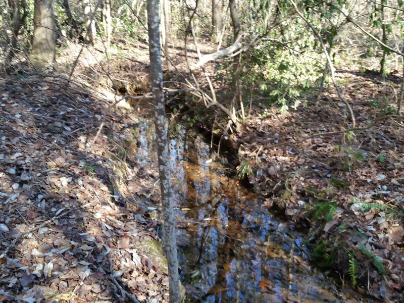 39+/- Acres Timberland & Homesite : Mellow Valley : Clay County : Alabama