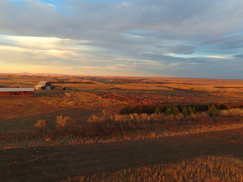 Double C Ranch Pheasants On The Riv : Mobridge : Corson County : South Dakota
