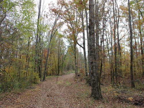 Affordable Hunting Tract : Roberta : Crawford County : Georgia