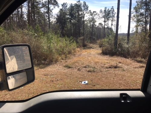 85 Acres Lamar County With Red Cree : Lumberton : Lamar County : Mississippi