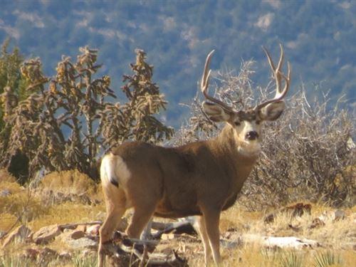 Hidden Valley Ranch : Kim : Las Animas County : Colorado